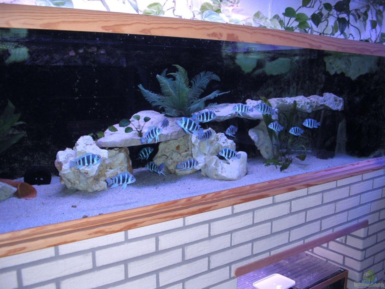 Aquarium von Wolfgang Schlader: Becken 1977