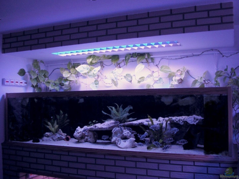 aquarium von wolfgang schlader becken 1977. Black Bedroom Furniture Sets. Home Design Ideas