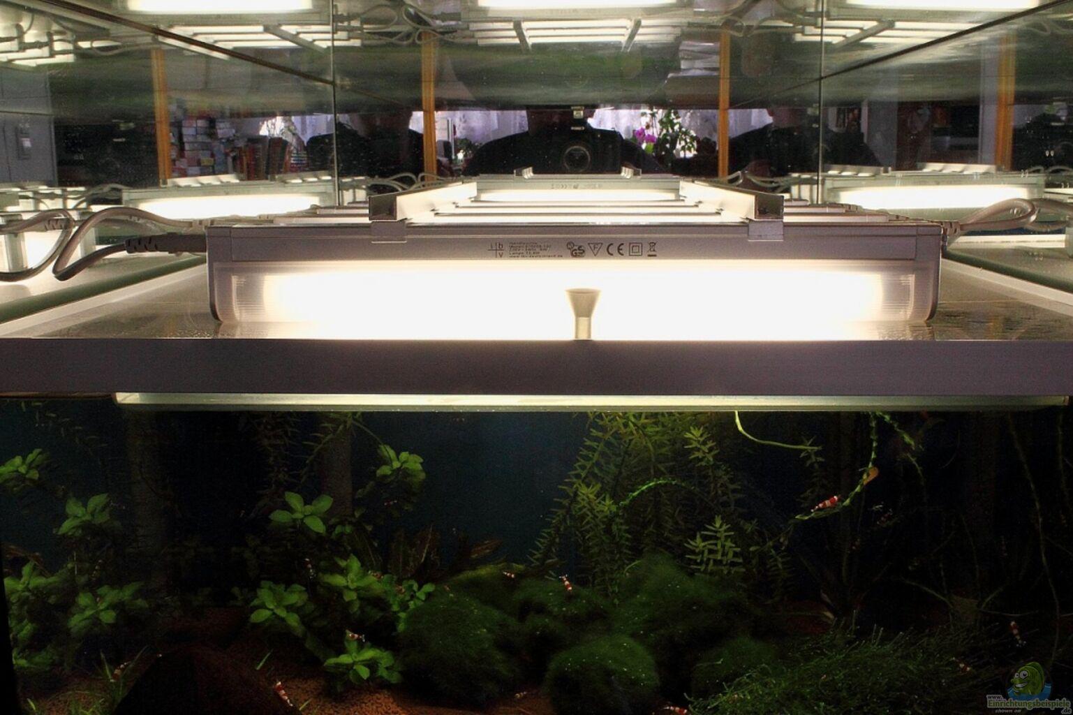 aquarium von micha 70er red bee vitrinen tank. Black Bedroom Furniture Sets. Home Design Ideas