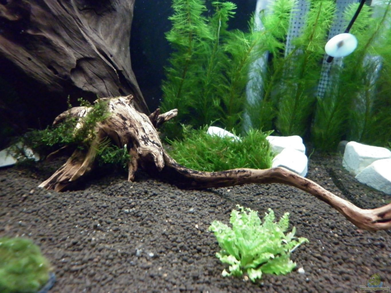 pflanzen im aquarium bee tank nur noch als beispiel aus bee tank nur noch als beispiel von. Black Bedroom Furniture Sets. Home Design Ideas