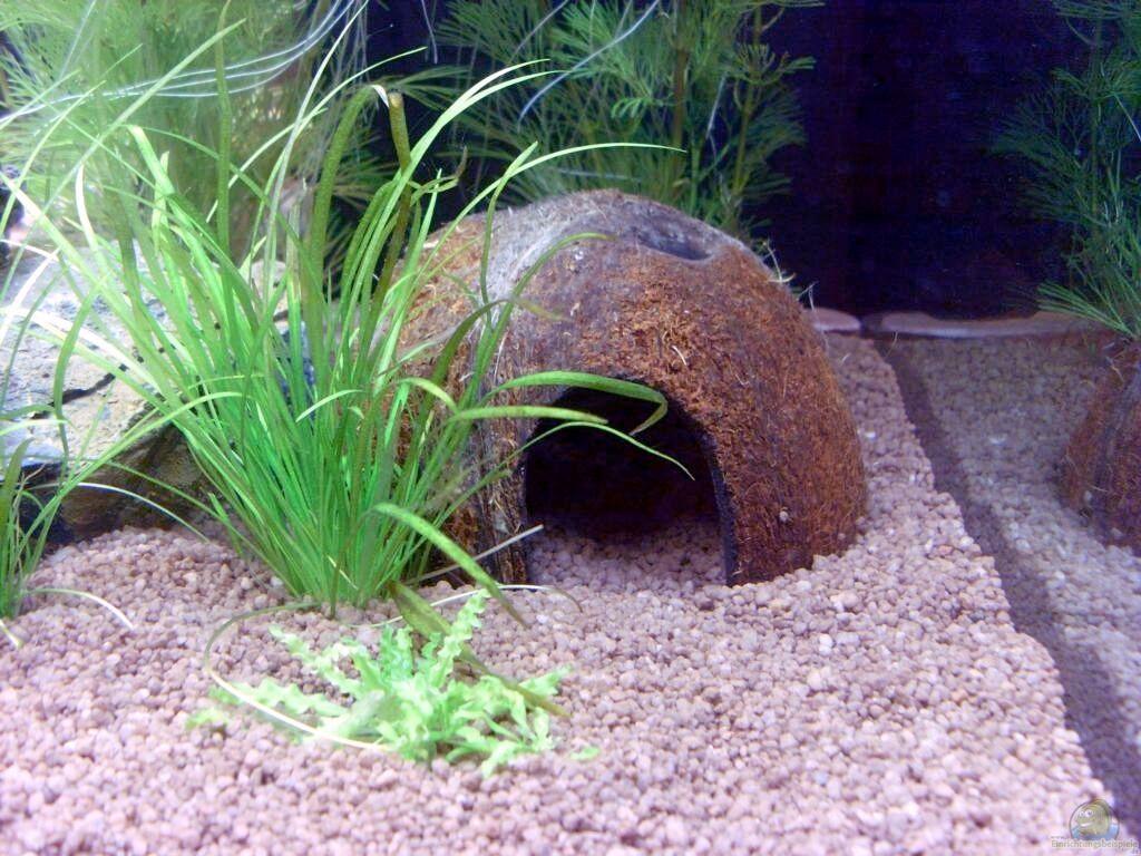 aquarium von springer maroni home. Black Bedroom Furniture Sets. Home Design Ideas