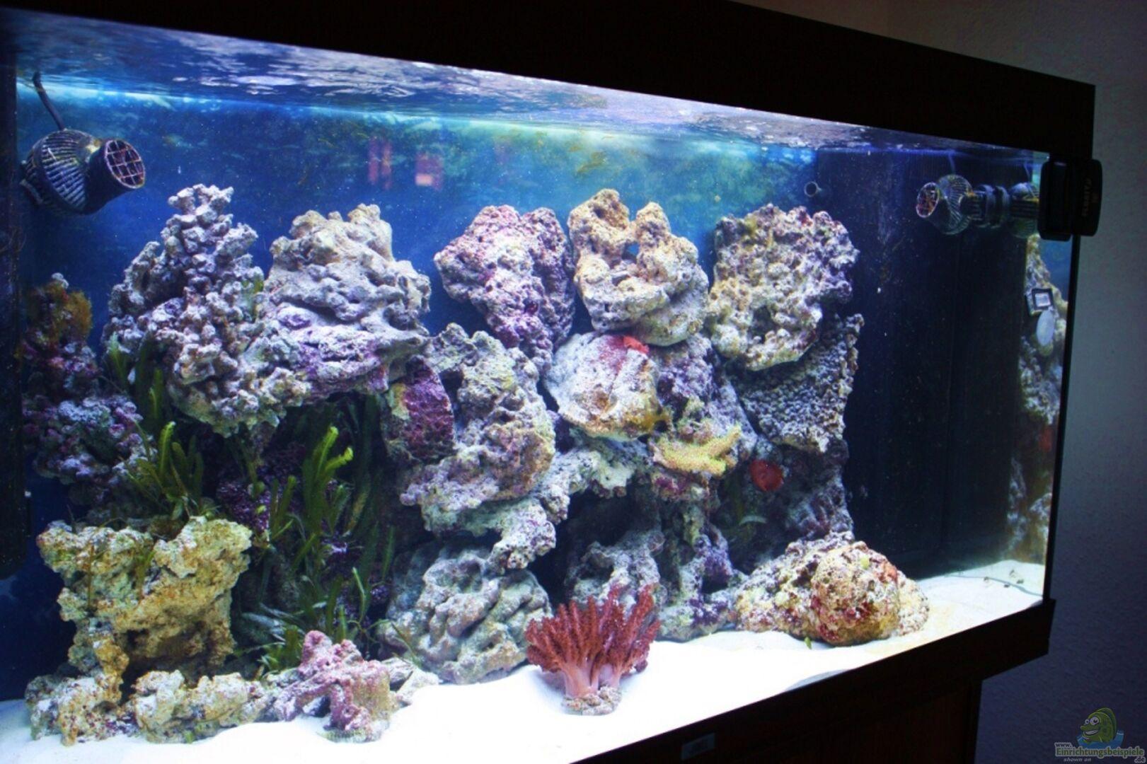 Aquarium von Thorsten John: Becken 19856