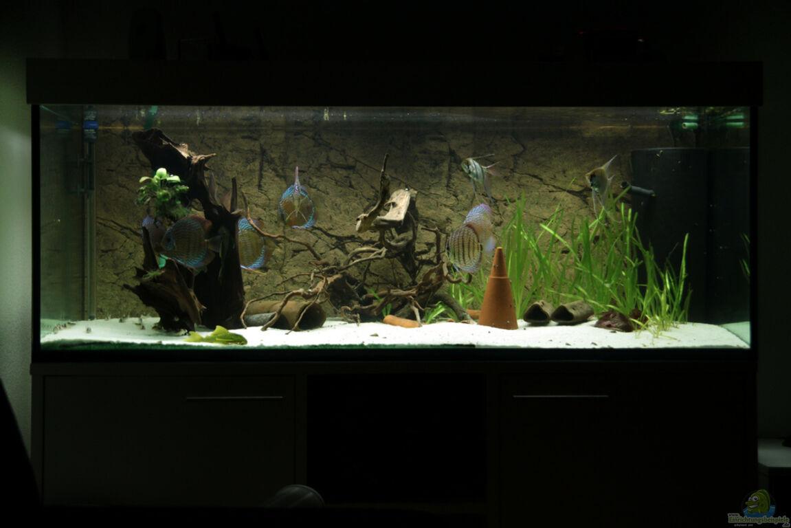 Aquarium von teh d diskus tank for Diskus aquarium