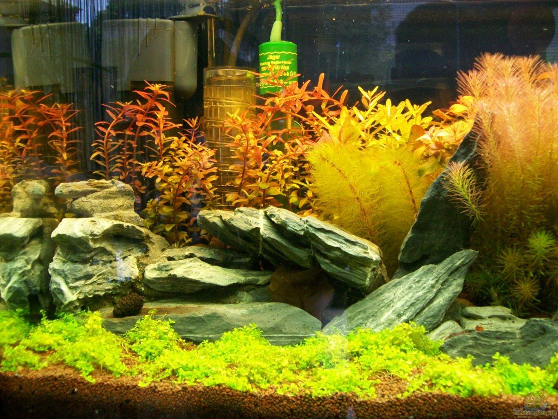 aquarium von sascha74 meine ruhezone. Black Bedroom Furniture Sets. Home Design Ideas