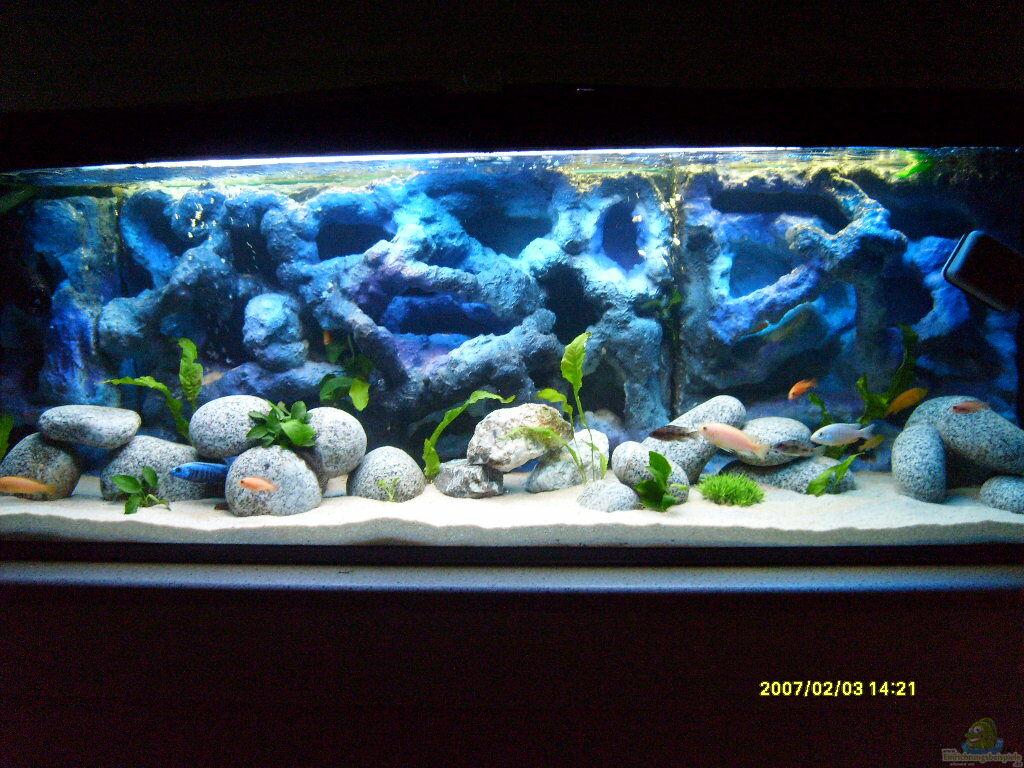 aquarium von james jones malawi becken. Black Bedroom Furniture Sets. Home Design Ideas