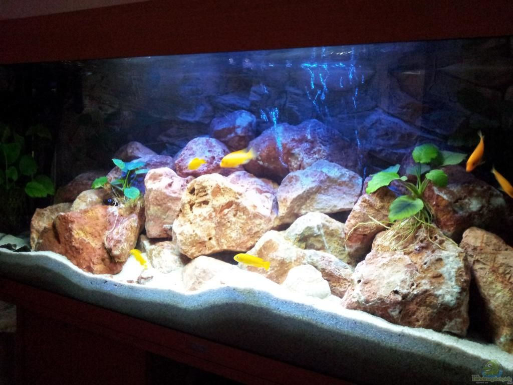 aquarium von brownson malawi 240 mbuna. Black Bedroom Furniture Sets. Home Design Ideas