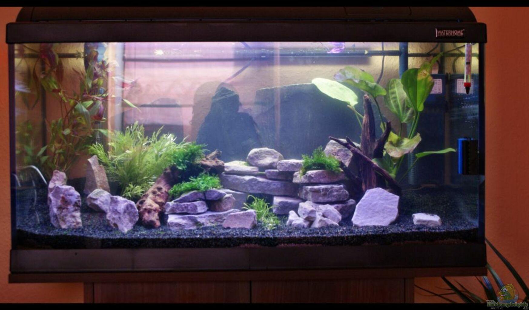 aquarium von stony becken 112 l nur noch als beispiel. Black Bedroom Furniture Sets. Home Design Ideas