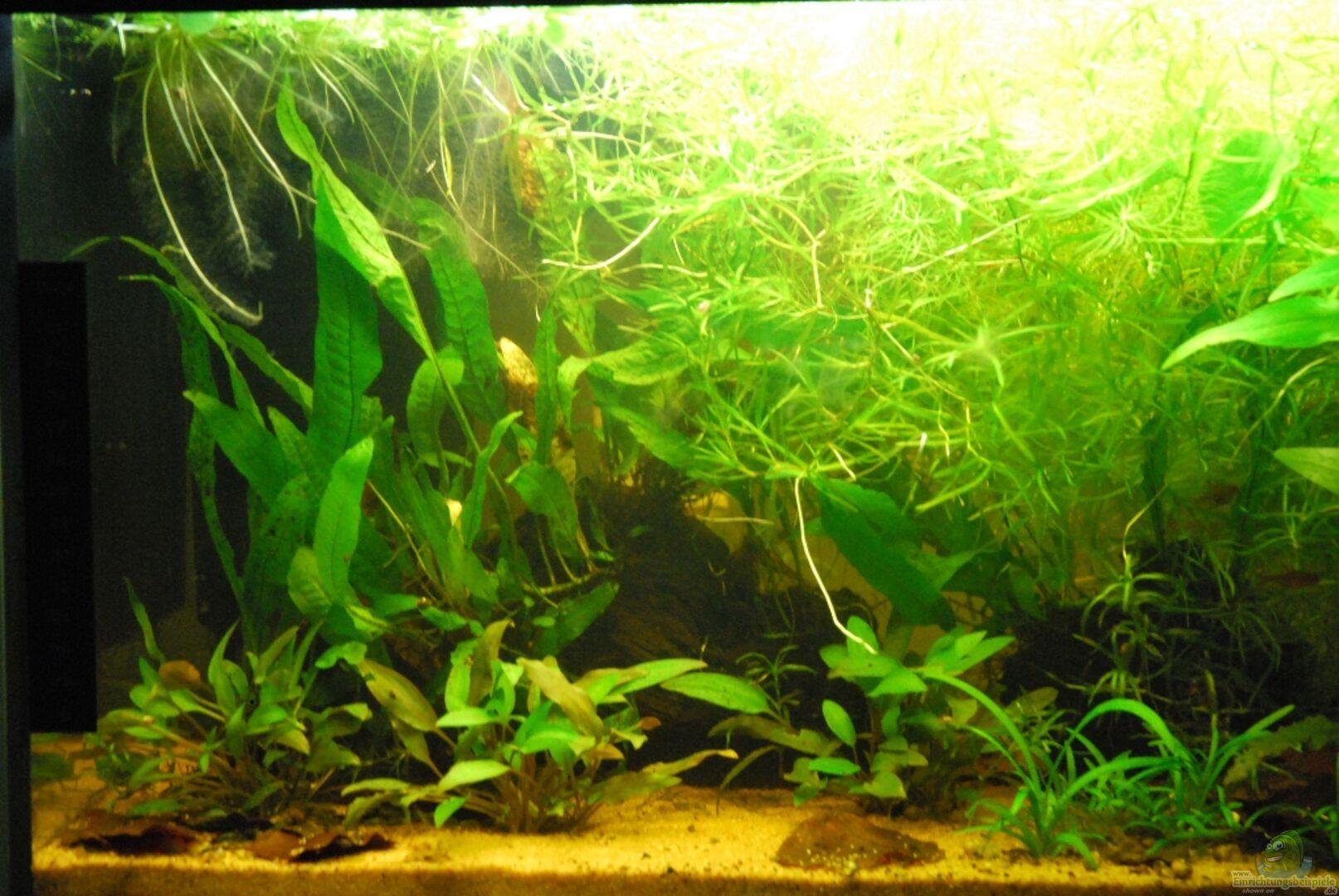 Peter meyer 20076 ismaninger krautbach nicht mehr in for Waterhome aquarium
