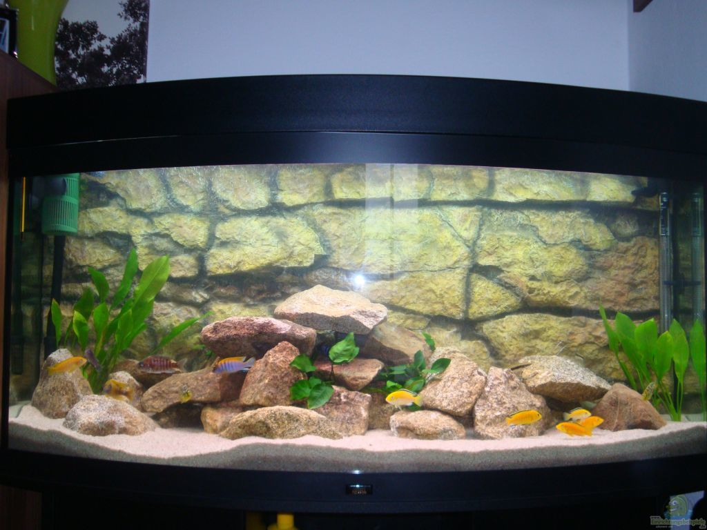 aquarium von sebastian stadler malawi becken juwel. Black Bedroom Furniture Sets. Home Design Ideas