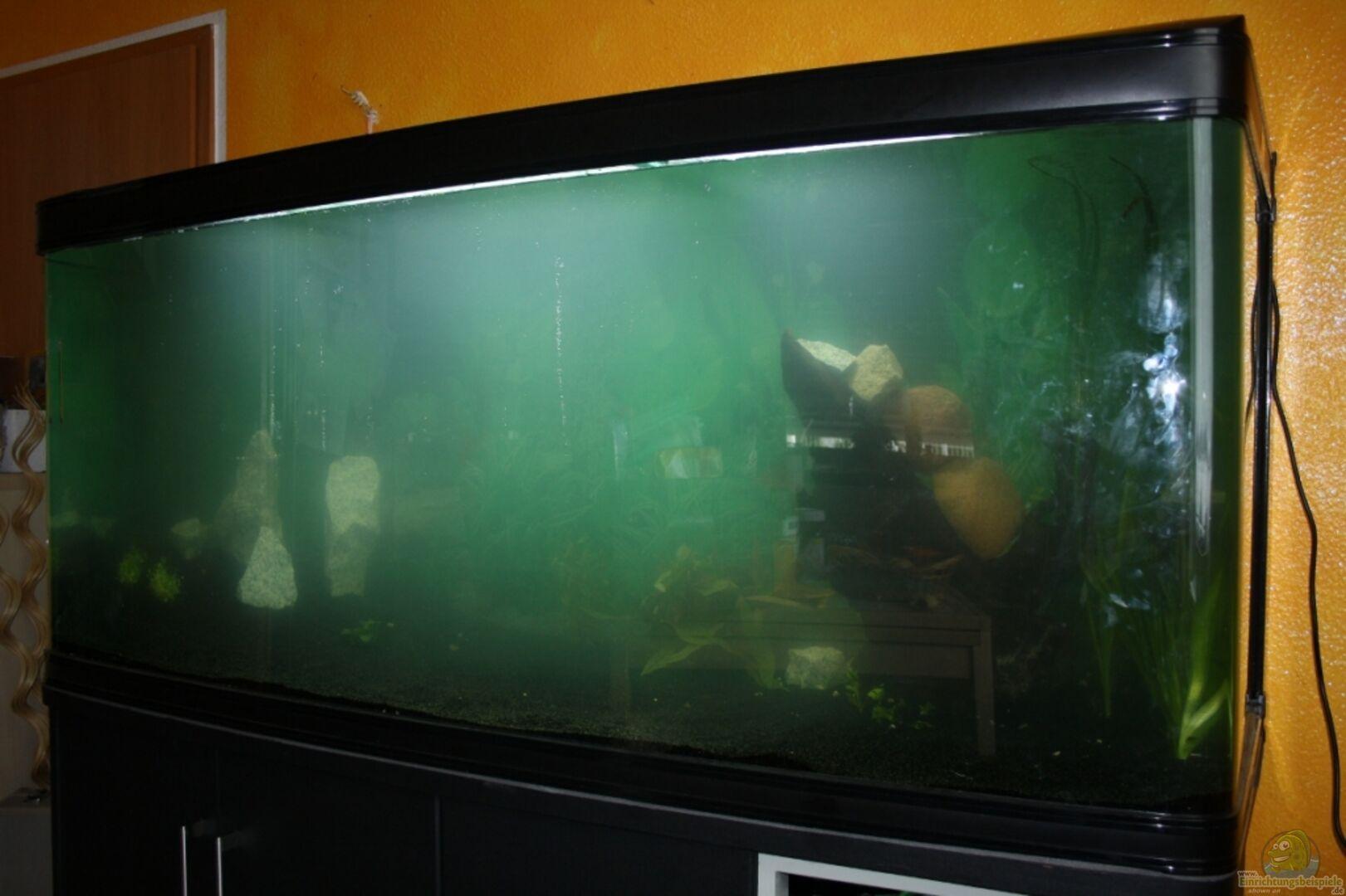 aquarium von wolle04 20094 mein gro es becken. Black Bedroom Furniture Sets. Home Design Ideas
