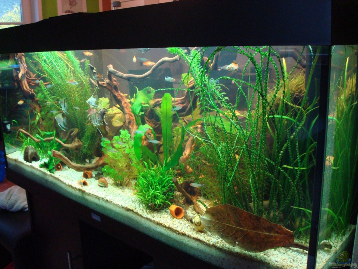 Example no 20117 from the category mixed america tanks for Aquarium 120x40x50