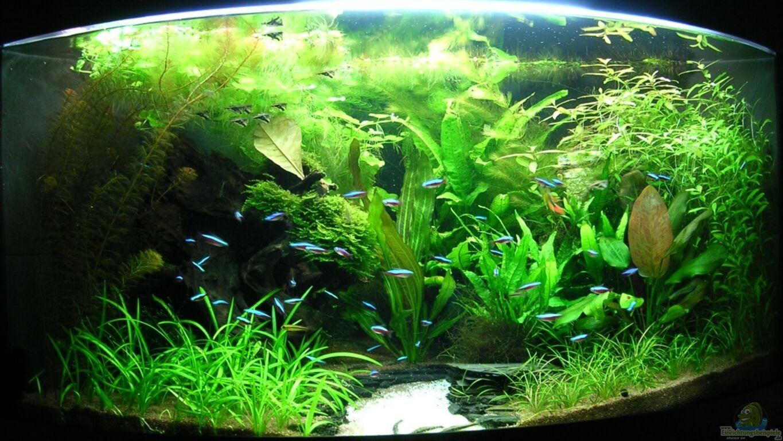 aquarium von christian grunwald trigon 350. Black Bedroom Furniture Sets. Home Design Ideas