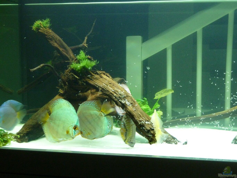 Aquarium von me8210 diskus for Diskus aquarium