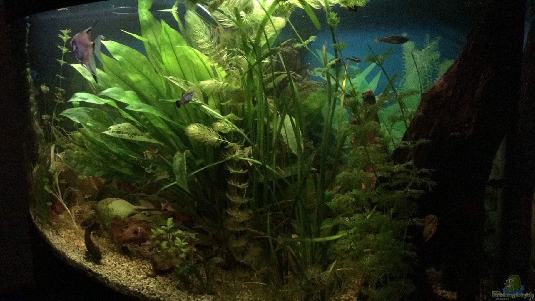 aquarium von flo fluval vicenza 260. Black Bedroom Furniture Sets. Home Design Ideas