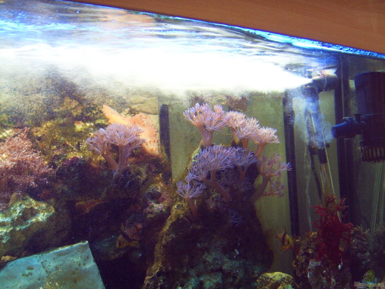 aquarium von frank stahn becken 20187. Black Bedroom Furniture Sets. Home Design Ideas