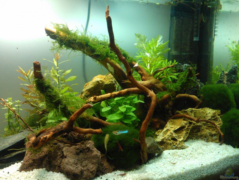 aquarium von madapusa nano 30l 96l. Black Bedroom Furniture Sets. Home Design Ideas