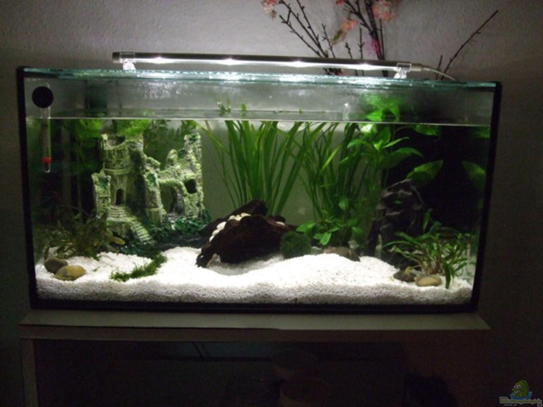 aquarium von elcah feng shui einrichtungsbeispiele. Black Bedroom Furniture Sets. Home Design Ideas