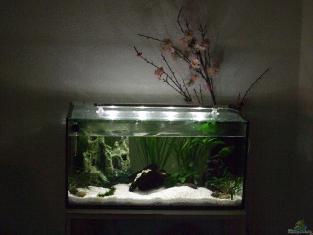 Aquarium Feng Shui Aquarium Von Elcah Feng Shui