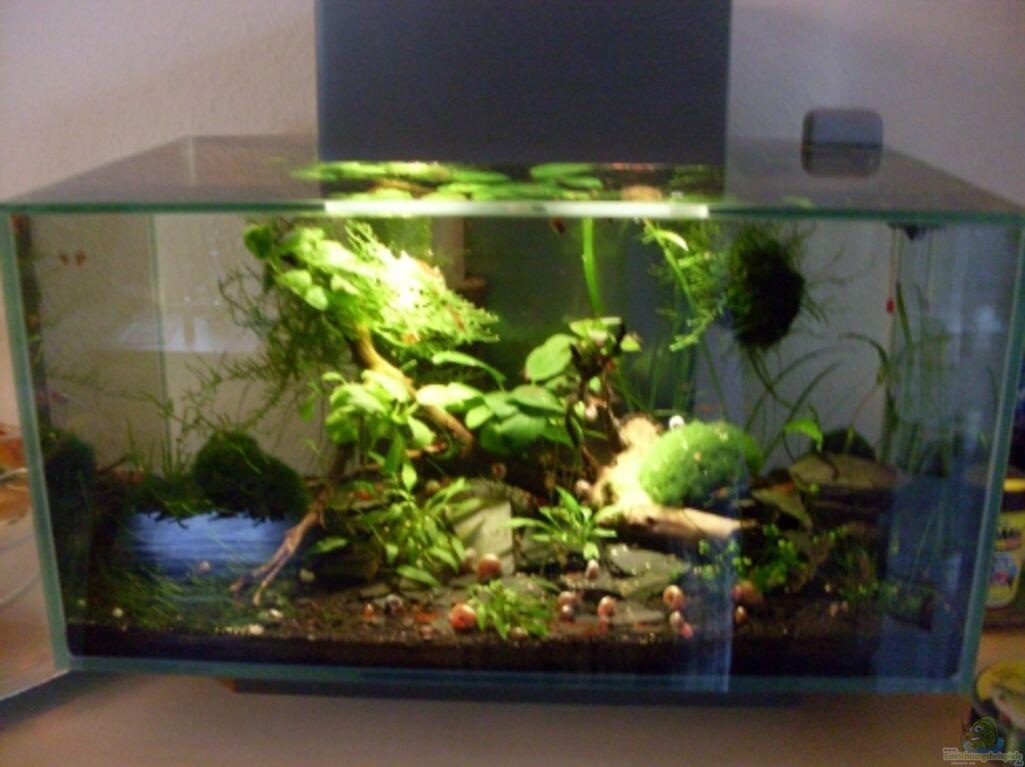 Aquarium von steffen9 fluval edge for Aquarium edge