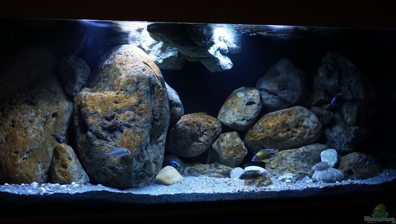 aquarium von andreas32 malawi. Black Bedroom Furniture Sets. Home Design Ideas