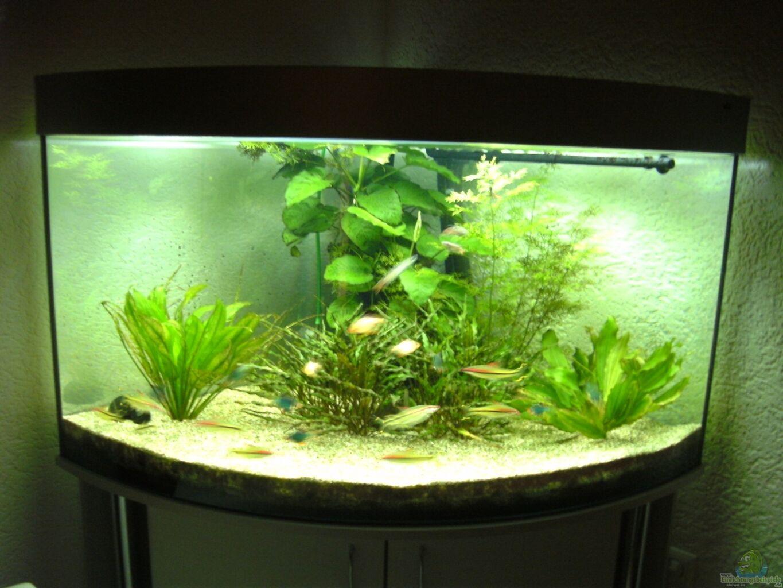 Aquarium Von Ralf Zimmermann Asienbecken