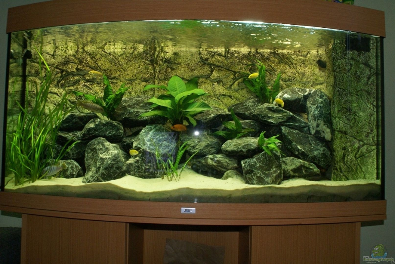 aquarium von onno83 20446 vision 260 malawi. Black Bedroom Furniture Sets. Home Design Ideas