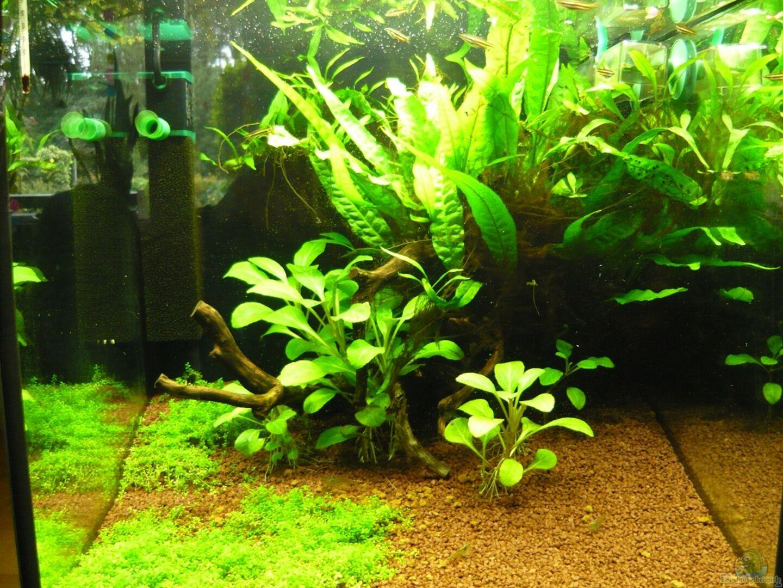 Aquarium Von Gerd Zimmermann Becken 20499