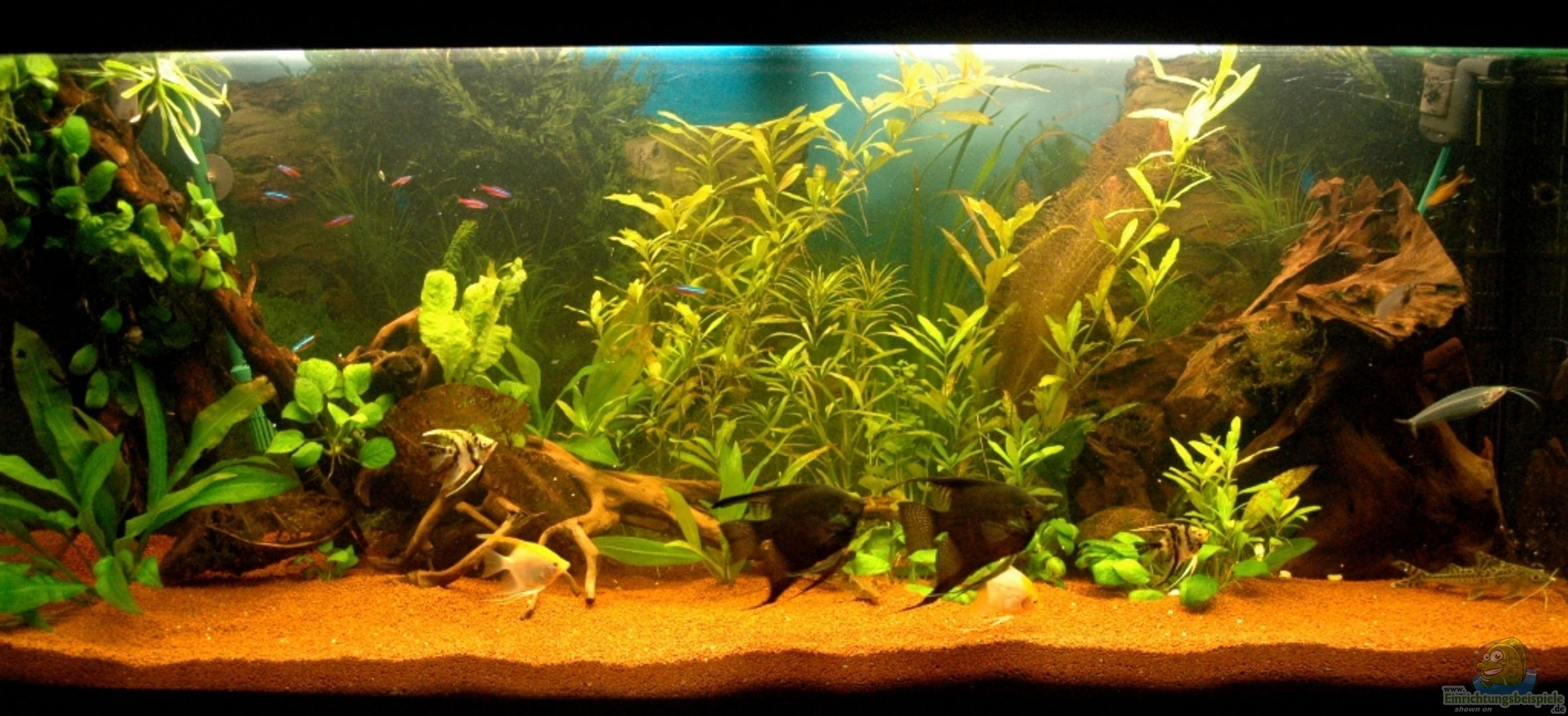 Aquarium von rafael nef 20545 ersteinrichtung for Aquarium 120x40x50