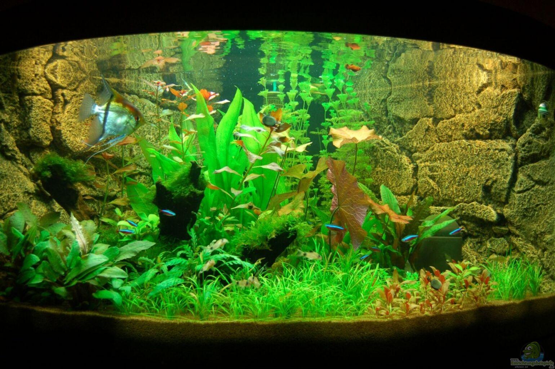 aquarium von sven seibert juwel trigon 350. Black Bedroom Furniture Sets. Home Design Ideas