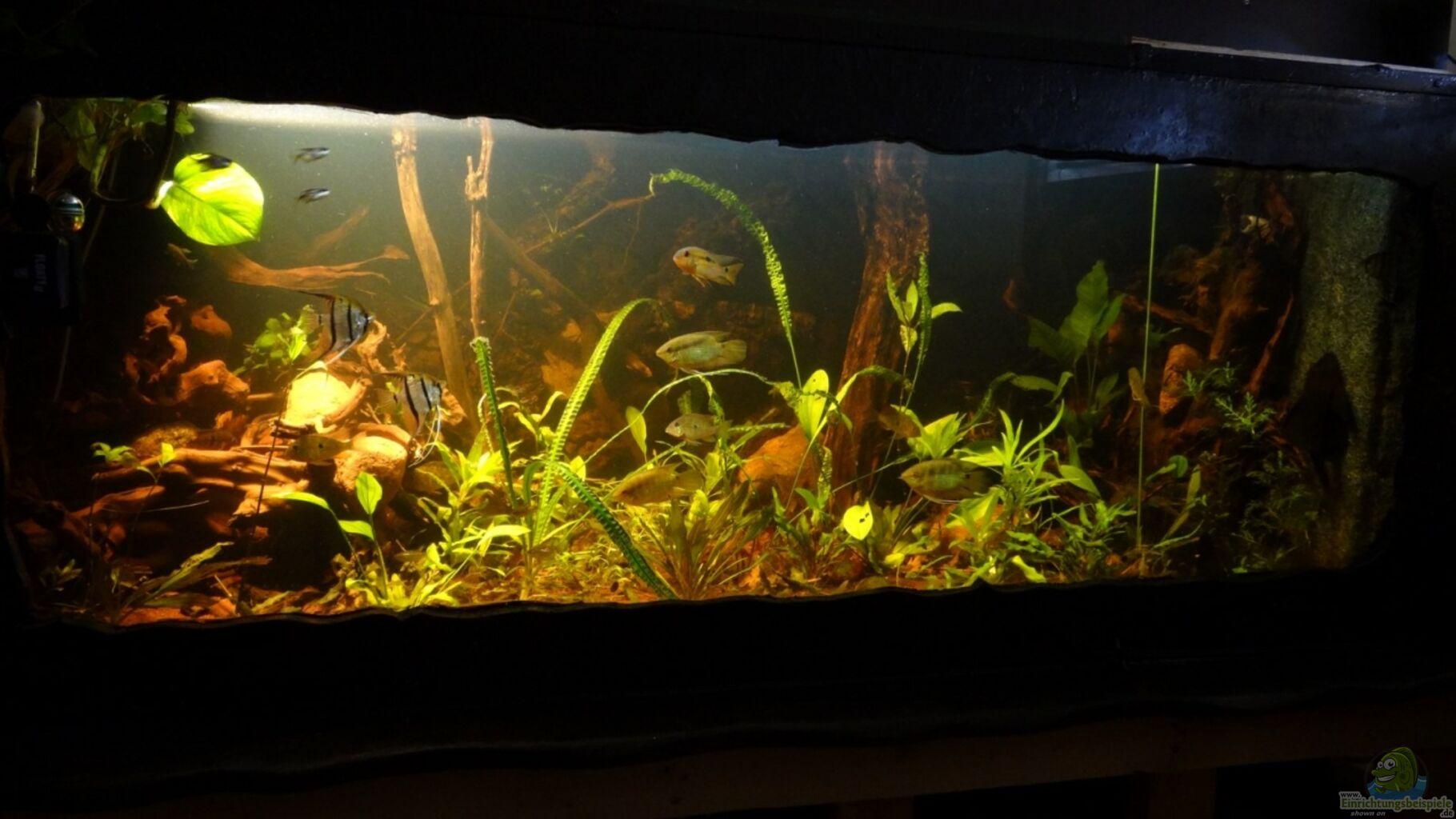aquarium von alex wulf becken 20558. Black Bedroom Furniture Sets. Home Design Ideas