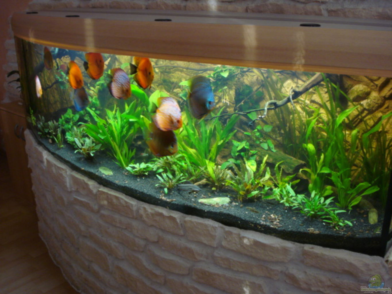 Example no 20605 from the category south america Decoration aquarium 60 litres