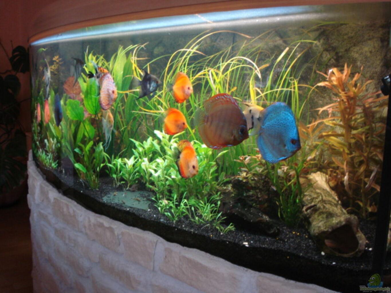 Aquarium von matze70 600l diskusbecken for Skalare zucht