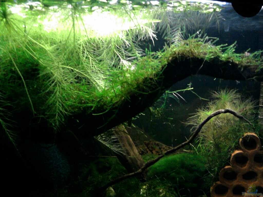 aquarium von die juli garneleninsel. Black Bedroom Furniture Sets. Home Design Ideas