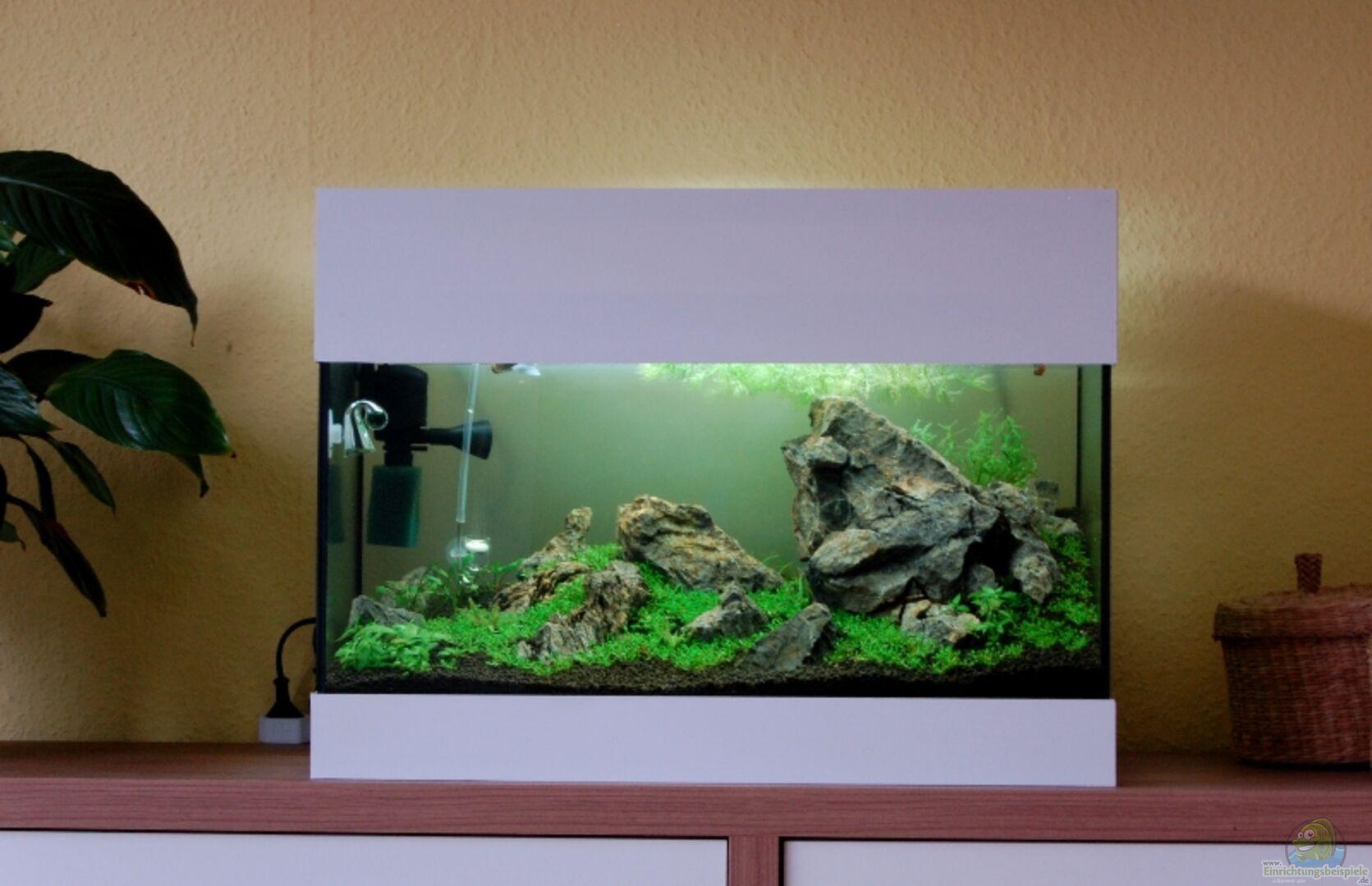 aquarium von kuro schio 20678 berge im glaskasten. Black Bedroom Furniture Sets. Home Design Ideas