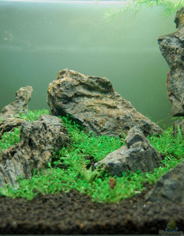 aquarium von kuro schio berge im glaskasten. Black Bedroom Furniture Sets. Home Design Ideas