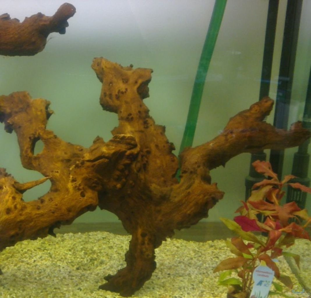 Example no 20748 from the category community tanks for Aquarium wurzel