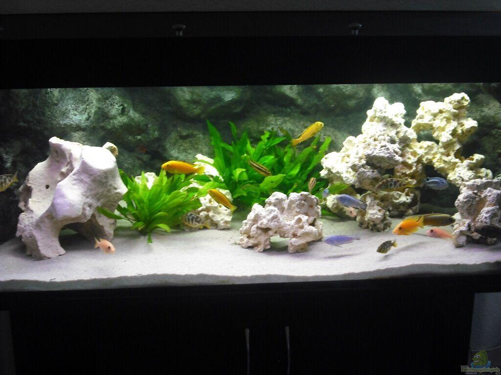 aquarium einrichten beispiele nano aquarium einrichten schritt f r schritt anleitung ber ideen. Black Bedroom Furniture Sets. Home Design Ideas