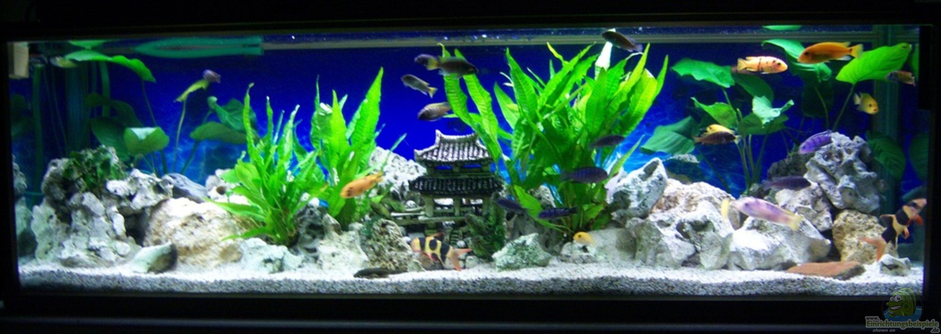 aquarium von 47 malawi 21483 nicht mehr in betrieb. Black Bedroom Furniture Sets. Home Design Ideas