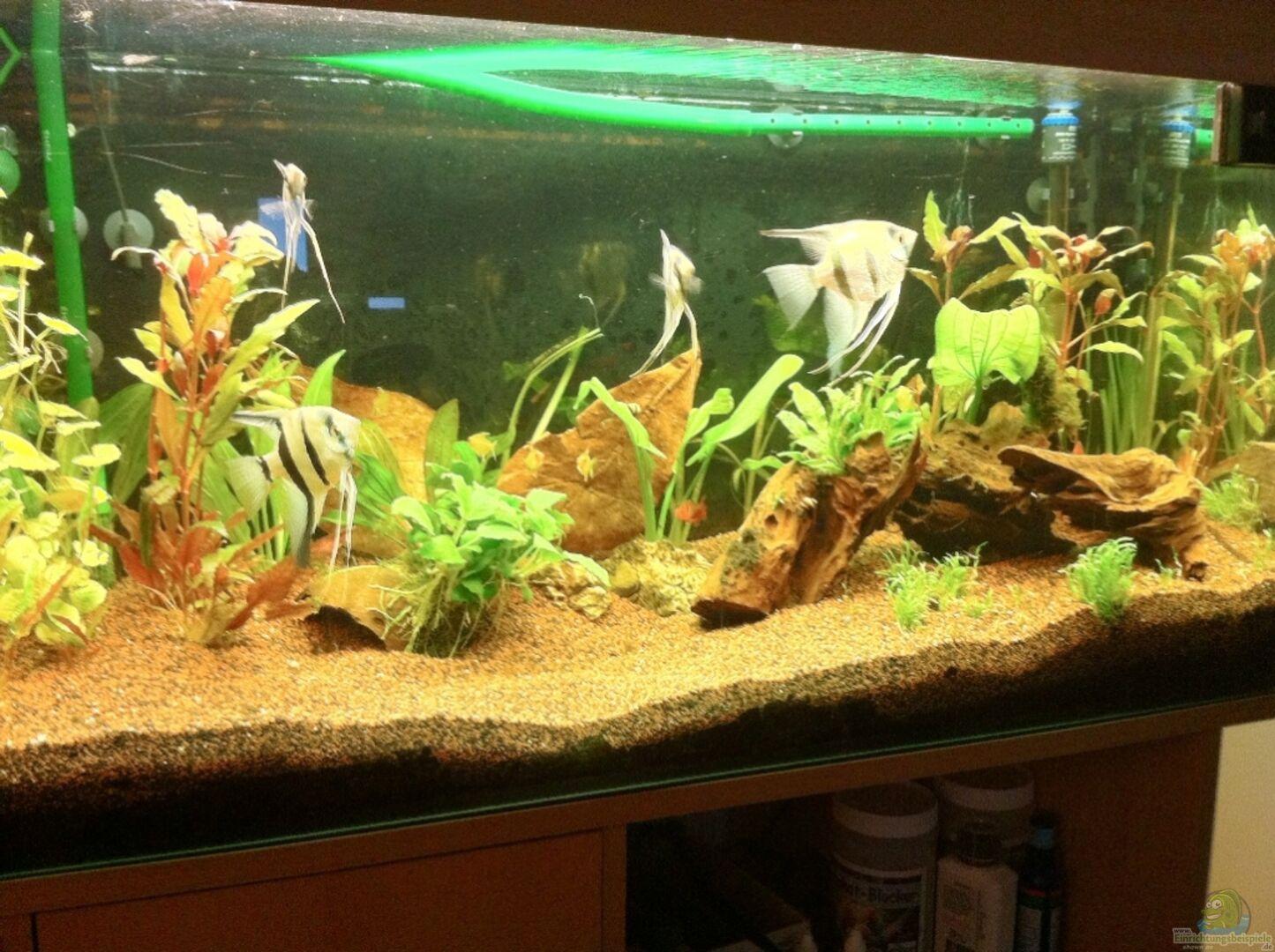 Aquarium einrichten ideen perfect elegant couchtisch with for Glasvase bepflanzen