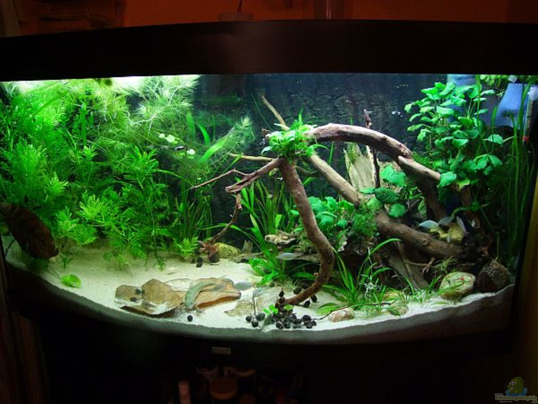 aquarium von denise83 260l bunt nicht mehr existent. Black Bedroom Furniture Sets. Home Design Ideas