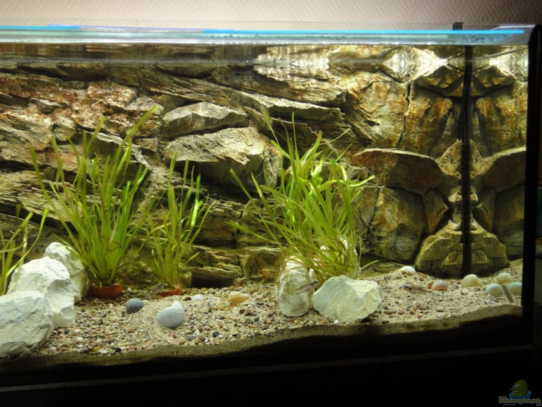 aquarium von geieros tanganjika 240 l. Black Bedroom Furniture Sets. Home Design Ideas