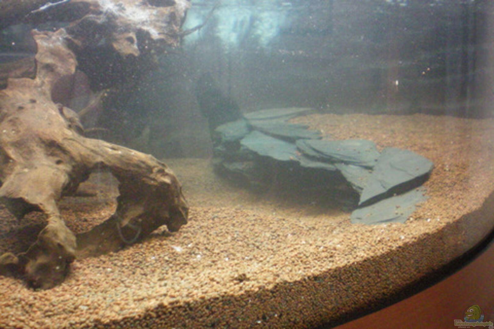 aquarium von thomas ahrens 21846 aqua asia ii. Black Bedroom Furniture Sets. Home Design Ideas