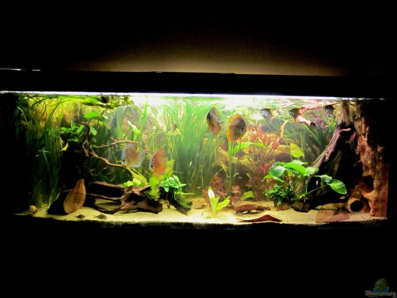 Aquarium von maxarl wohnzimmer schauaquarium - Aquarium wohnzimmer ...