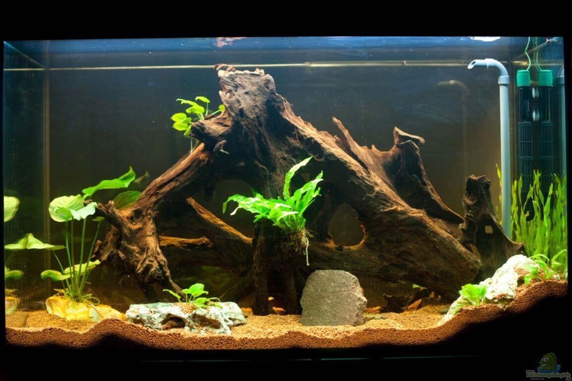aquarium von daniel80 raumteiler. Black Bedroom Furniture Sets. Home Design Ideas