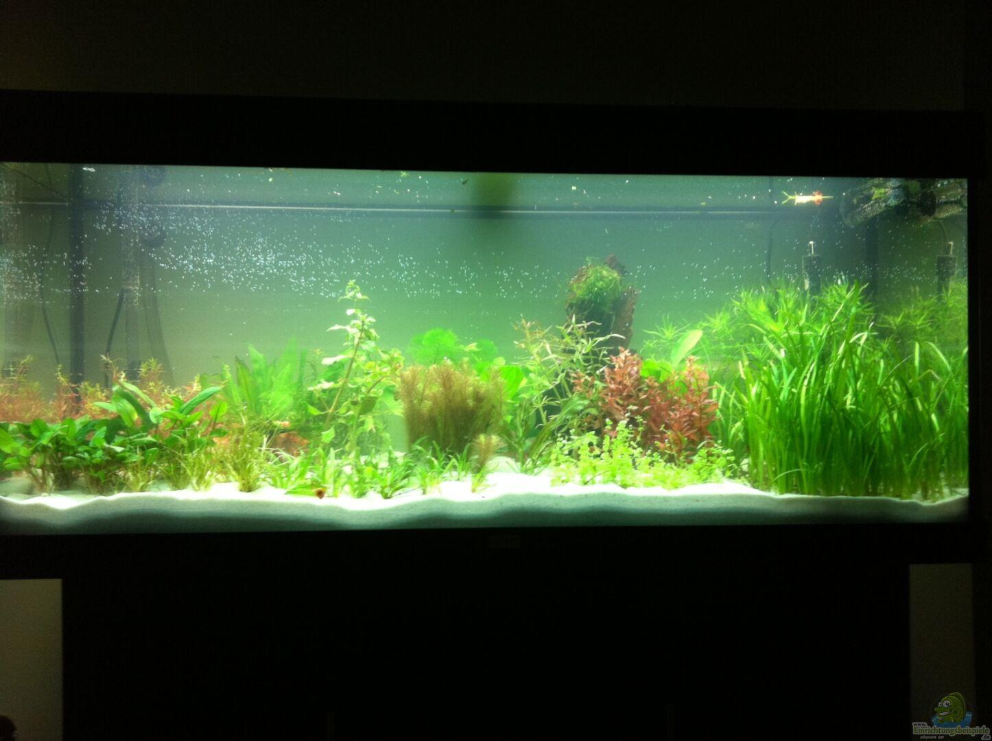aquarium von kellz26 21983 240 liter s damerika. Black Bedroom Furniture Sets. Home Design Ideas