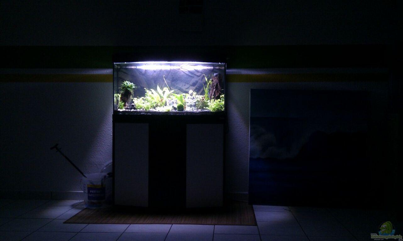aquarium von migaloo sydney s new world. Black Bedroom Furniture Sets. Home Design Ideas