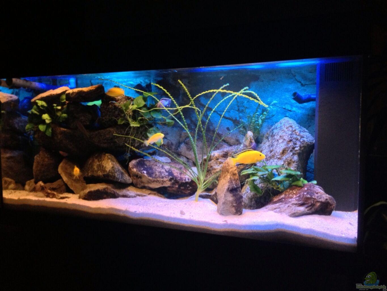 Aquarium von chanty becken 22123 for Aquarium becken
