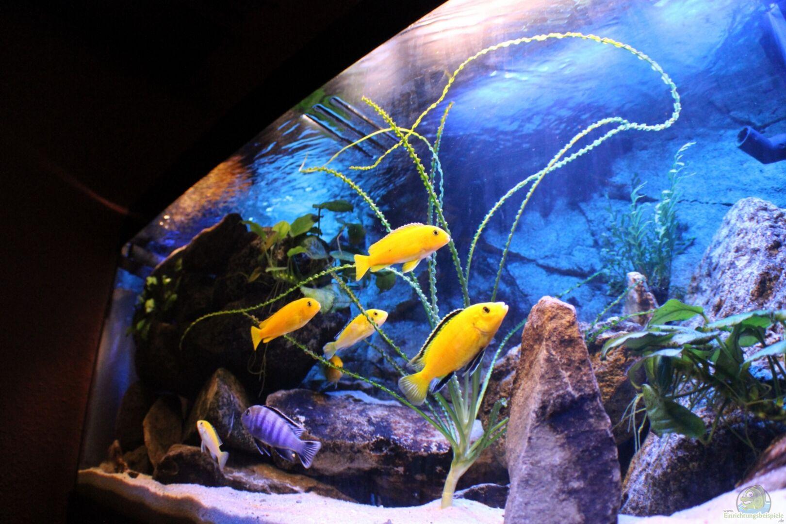 aquarium von chanty becken 22123. Black Bedroom Furniture Sets. Home Design Ideas