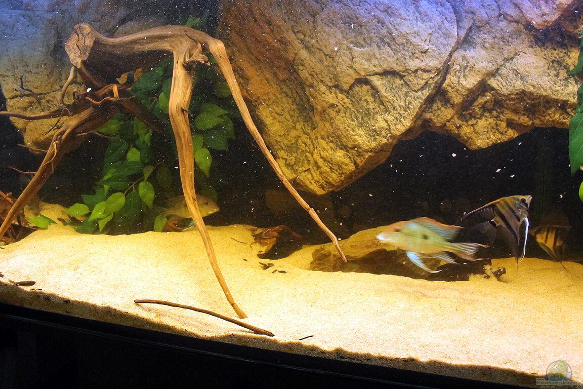 Aquarium Wohnzimmer Dekoration : Aquarium von amazonasfelix wohnzimmer orinoco