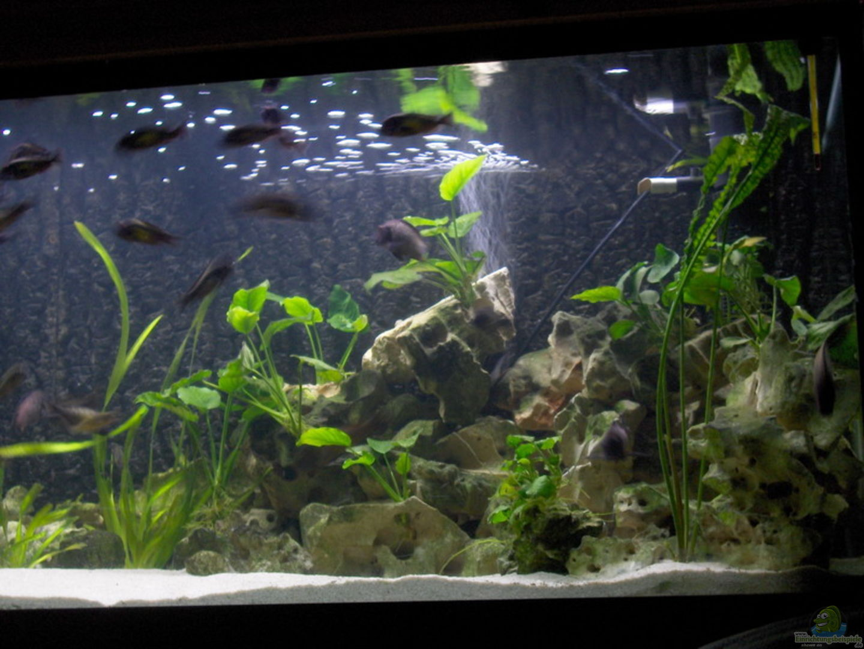 aquarium von sven ufer becken 2214. Black Bedroom Furniture Sets. Home Design Ideas